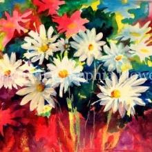 'Daisy Delight'