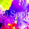 Sophia Flowers Artist